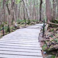 白駒の池 苔の森ハイキング