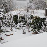 春なのに雪・・桜は大丈夫?