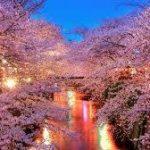 桜、咲く。あと1週間で令和。新たな時代の始まり。